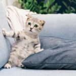 Is Cat Litter Toxic? [4 Things You Need To Know]