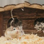 Do Hamsters Stink Up Your Room? [Know 3 Things]